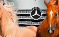 GWF_Web_Artikelbild_Mercedes_Pferde